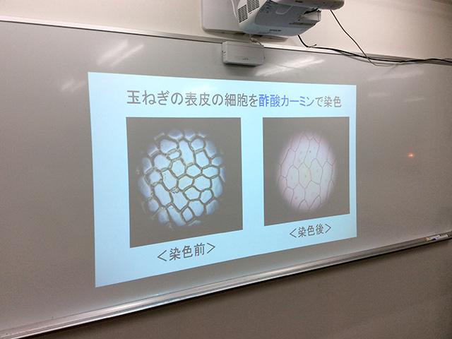 電子黒板を利用した理科の実験や数学の図形問題など、教科書では理解しづらい内容も視覚的に学ぶことができます。