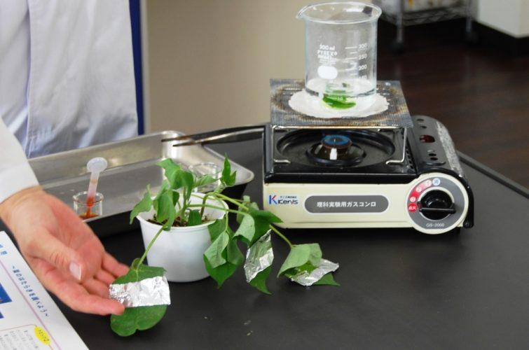 Lab 小学生コース(上級) 5月の実験は「植物」~葉緑素の抽出~